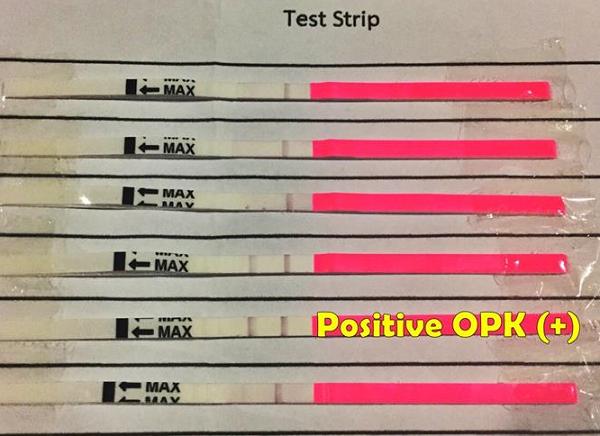 Ovulation Predictor Kit strips