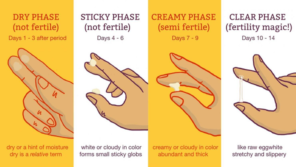 Tracking ovulation by checking cervical mucus